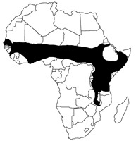 hedgehog map Africa