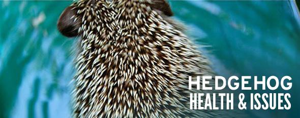hedgehog health issues photo