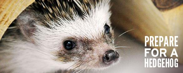 prepare for a hedgehog photo